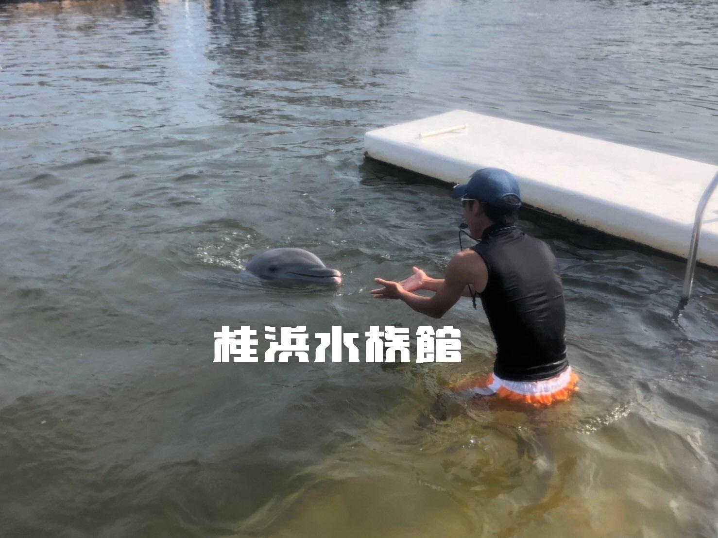 桂浜水族館イケメン